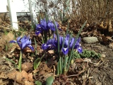Purple Reign: Inspiration for SpringDecor